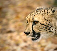 Cheetah Run by Lisa G. Putman