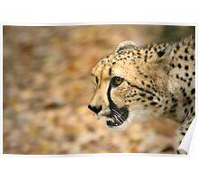Cheetah Run Poster