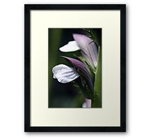 Quiet.... Eating.... Framed Print