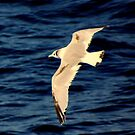 Glide #2 by lanebrain photography