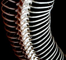 spine by estherase