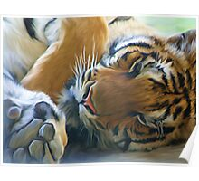Tiger Laying #2 Poster