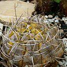 Thorny Cactus by Diana Forgione