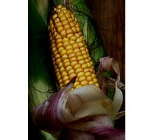 harvest Photographic Print