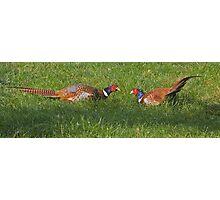Pheasants with attitude! Photographic Print