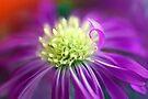 Purple Daisy Heart by Renee Hubbard Fine Art Photography