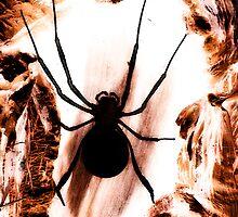 Spirit Spider by Lynette Higgs