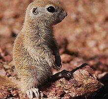 Baby squirrel by Michele Conner