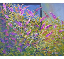Butterfly Bushes Photographic Print