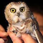 saw whet owl full face by Alice Kahn