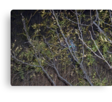 what's lurking in the dark? Canvas Print