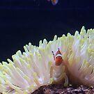 Nemo by Lauren Banks