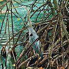 Blue Heron by Beatriz  Cruz