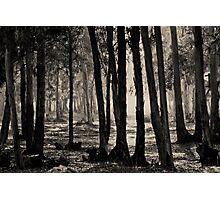 wood calling Photographic Print