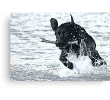 Our Dog Jack Canvas Print