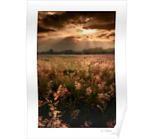 Summer meadow, open - Homer, nr Much Wenlock Poster