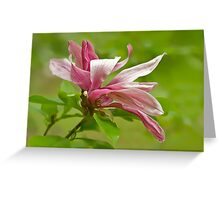 Graceful Magnolia Greeting Card
