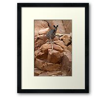 Curious rock wallaby in Nitmiluk Gorge, Katherine, Northern Territory Framed Print