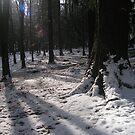 Winter Light by lissygrace