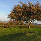 Tree Alight on the Hillside by lissygrace