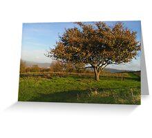 Tree Alight on the Hillside Greeting Card