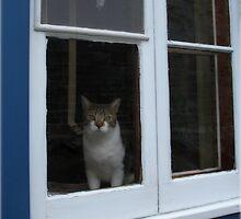 Kitty in the Window by jsflysrc