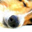When Angels Sleep by Kelly Gara