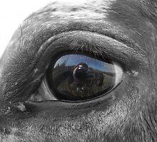 The Eye of My Apple by Kelly Gara