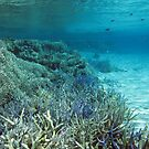 Rowley Shoals I by Dr Andy Lewis