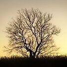 Single sunset  TREE by Diane Trummer Sullivan
