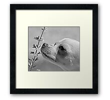 Chihuahua and the Important Message--Take Time to Smell the Flowers Framed Print