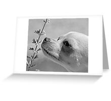 Chihuahua and the Important Message--Take Time to Smell the Flowers Greeting Card