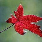 Autumn III by bkphoto