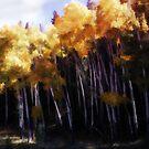 ROCKY MOUNTAIN NATIONAL PARK by dvande1