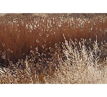 Morning Light Melody Photographic Print