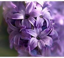 Flower 7 Photographic Print