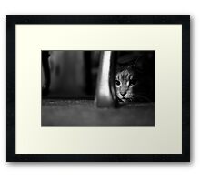 On the Prowl (B&W) Framed Print