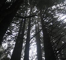 Tree Canopy - Redwood Forest by sbm-designs