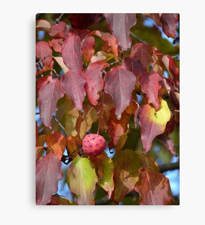 Dogwood fruit Canvas Print