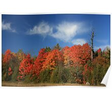 Fall Colors - Kingston, Ontario Poster