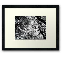 treetops 3 Framed Print