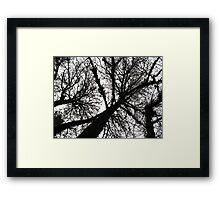 treetops 2 Framed Print