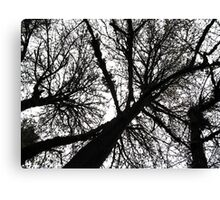 treetops 2 Canvas Print