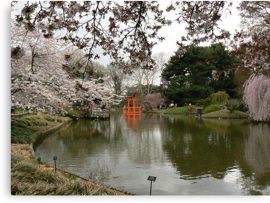 Japanese Garden in Cherry Blossom Season #2 by MischaC