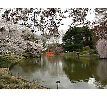 Japanese Garden in Cherry Blossom Season #2 Photographic Print