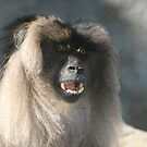 Lion-tailed Macaques by Lisa G. Putman
