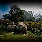 Bolders and Ferns, Lysterfield, Victoria by Jurgen  Schulz