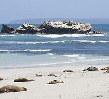 Seal Bay, Kangaroo Island, Australia by Deb22
