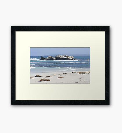 Seal Bay, Kangaroo Island, Australia Framed Print