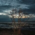Stand alone tree at sunset  by sanyi